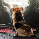 Barrière de sécurité pour chien pour coffre de voiture ; comment trouver les meilleurs modèles TOP 2 image 1 produit