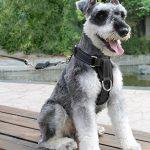 Lifepul Chien Sécurité Vest Harness, Pet Dog Veste Réglable avec Voiture Nylon Ceinture de Sécurité Clip de Plomb pour le Transport de la marque lifepul image 6 produit