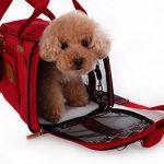 Panier velo pour petit chien ; comment trouver les meilleurs en france TOP 6 image 1 produit