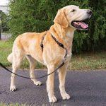Transporter un chien en voiture, faire des affaires TOP 5 image 1 produit