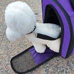 Sac à dos pour chat/chien approuvé pour transport aérien Port à l'avant ou sur le dos Pour extérieur/marche/randonnée Pour animal pesant jusqu'à 4 kg de la marque PETCOMER image 5 produit