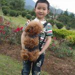 Sac de transport ventral chien - les meilleurs modèles TOP 9 image 3 produit
