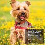 Sac dos transport chien ; comment choisir les meilleurs modèles TOP 7 image 5 produit